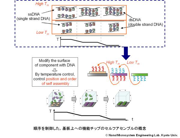 DNAを用いた順序制御可能なマイクロチップアセンブリ – Nano/Micro ...